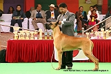 delhi-kennel-club1421138286.jpg