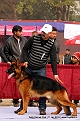 delhi-kennel-club1421139527.jpg