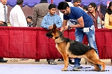 delhi-kennel-club1421139572.jpg