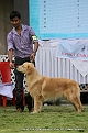jabalpur-dog-show-2-nov-2014_107.jpg