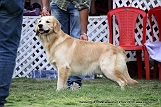 jabalpur-dog-show-2-nov-2014_111.jpg