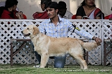 jabalpur-dog-show-2-nov-2014_115.jpg