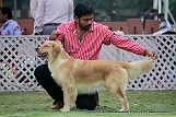 jabalpur-dog-show-2-nov-2014_117.jpg