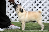 jabalpur-dog-show-2-nov-2014_12.jpg