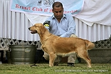 jabalpur-dog-show-2-nov-2014_124.jpg