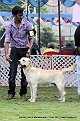 jabalpur-dog-show-2-nov-2014_130.jpg