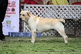 jabalpur-dog-show-2-nov-2014_132.jpg
