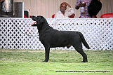 jabalpur-dog-show-2-nov-2014_136.jpg