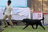 jabalpur-dog-show-2-nov-2014_138.jpg