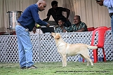 jabalpur-dog-show-2-nov-2014_140.jpg