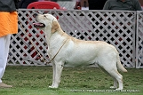jabalpur-dog-show-2-nov-2014_145.jpg