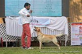 jabalpur-dog-show-2-nov-2014_158.jpg