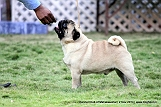 jabalpur-dog-show-2-nov-2014_18.jpg