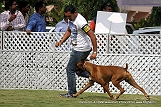 jabalpur-dog-show-2-nov-2014_182.jpg