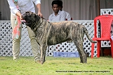 jabalpur-dog-show-2-nov-2014_187.jpg