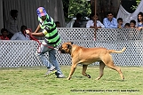 jabalpur-dog-show-2-nov-2014_191.jpg