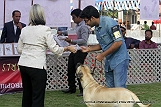 jabalpur-dog-show-2-nov-2014_196.jpg