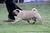 jabalpur-dog-show-2-nov-2014_20.jpg