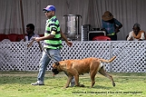 jabalpur-dog-show-2-nov-2014_202.jpg