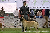 jabalpur-dog-show-2-nov-2014_205.jpg