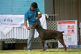 jabalpur-dog-show-2-nov-2014_219.jpg
