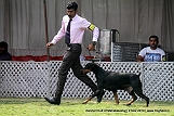 jabalpur-dog-show-2-nov-2014_223.jpg