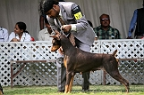 jabalpur-dog-show-2-nov-2014_244.jpg