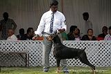 jabalpur-dog-show-2-nov-2014_248.jpg