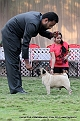 jabalpur-dog-show-2-nov-2014_25.jpg