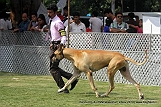 jabalpur-dog-show-2-nov-2014_258.jpg