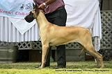 jabalpur-dog-show-2-nov-2014_260.jpg