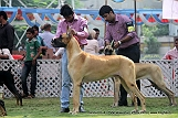 jabalpur-dog-show-2-nov-2014_263.jpg