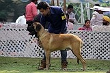 jabalpur-dog-show-2-nov-2014_266.jpg