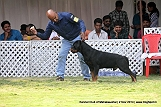 jabalpur-dog-show-2-nov-2014_269.jpg