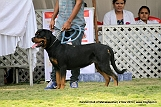 jabalpur-dog-show-2-nov-2014_281.jpg