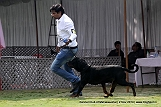 jabalpur-dog-show-2-nov-2014_284.jpg