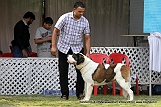 jabalpur-dog-show-2-nov-2014_287.jpg