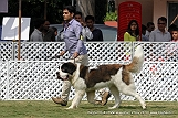 jabalpur-dog-show-2-nov-2014_292.jpg