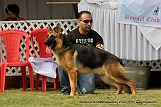 jabalpur-dog-show-2-nov-2014_305.jpg
