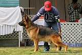 jabalpur-dog-show-2-nov-2014_314.jpg