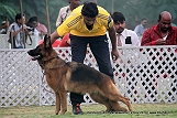 jabalpur-dog-show-2-nov-2014_332.jpg