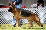 jabalpur-dog-show-2-nov-2014_346.jpg