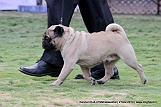 jabalpur-dog-show-2-nov-2014_36.jpg