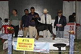 jabalpur-dog-show-2-nov-2014_371.jpg