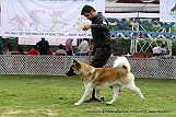 jabalpur-dog-show-2-nov-2014_42.jpg