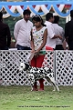 jabalpur-dog-show-2-nov-2014_46.jpg