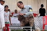 jabalpur-dog-show-2-nov-2014_48.jpg