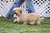 jabalpur-dog-show-2-nov-2014_51.jpg