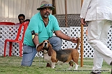 jabalpur-dog-show-2-nov-2014_58.jpg
