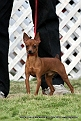 jabalpur-dog-show-2-nov-2014_6.jpg
